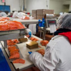 produkcja pakowanie ryb lososia 2018